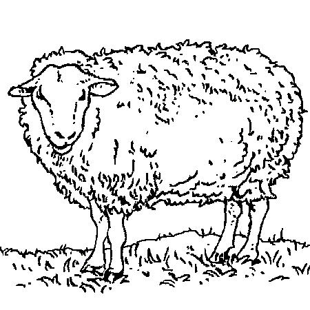 Les indignés de l'Aïd El kébir dans Liens mouton
